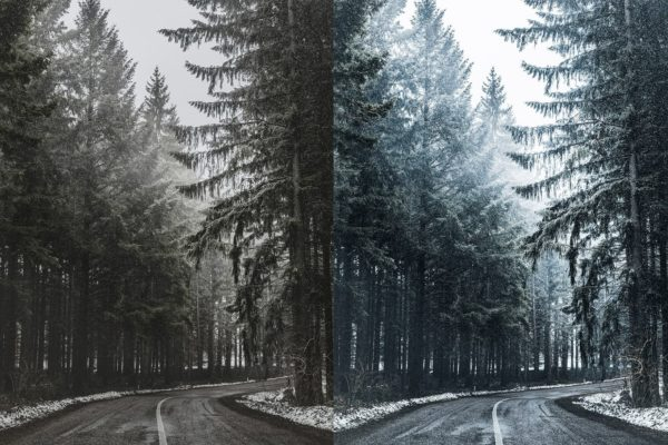 forest with winter lightroom preset from anagram design