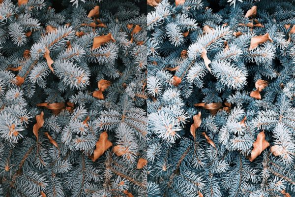 pine with winter lightroom preset from anagram design